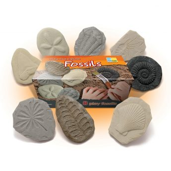 "Eight realistic tactile fossils - great for discovery and investigation (3-3.5"")"